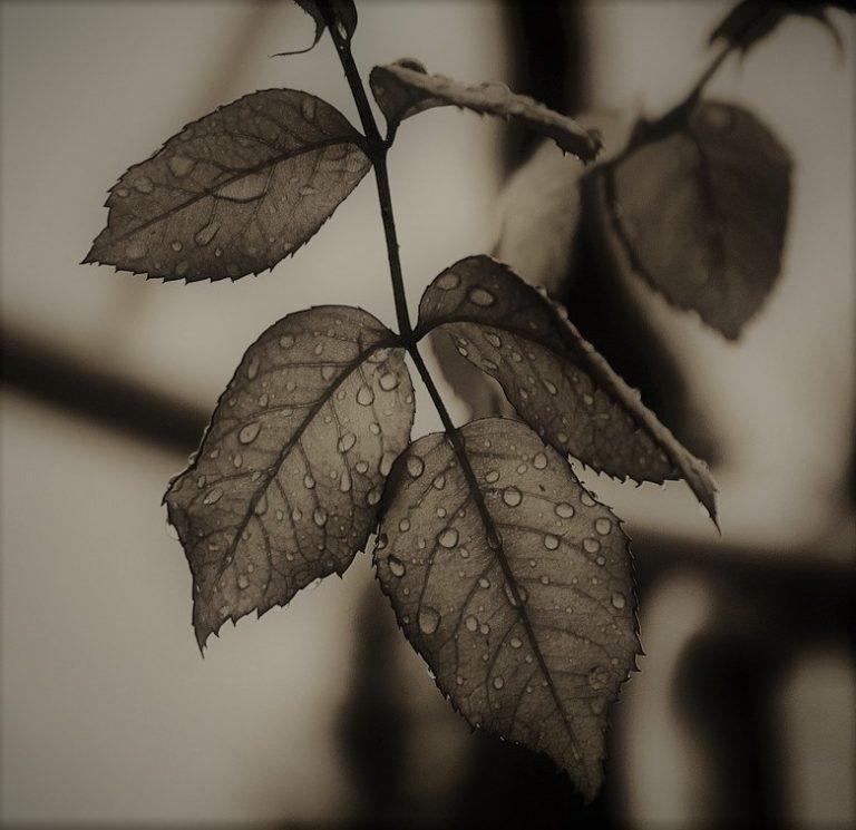 Savitarium - Poezja Słowiańska - 5.10.2021